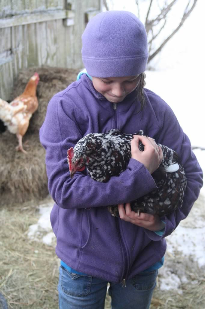 farm trip orion with chicken