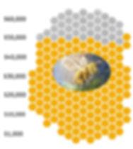 Bee Graphic 48,000.jpg