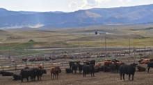 Padlock Ranch Wins BQA Award