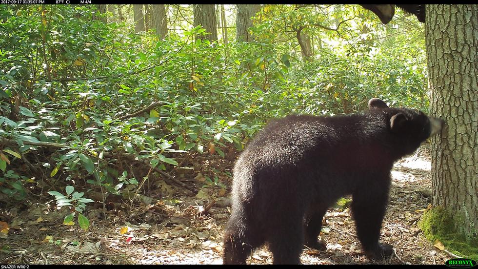 Spidey Bear Cub