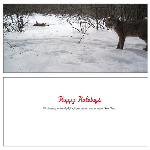 Bobcat Pair Holiday Card Set