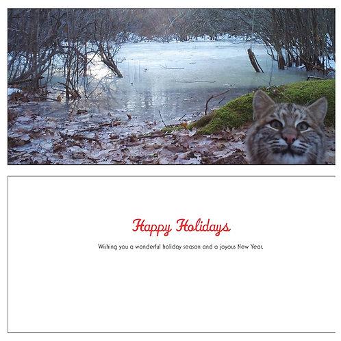 Bobcat Photobomber Holiday Card Set