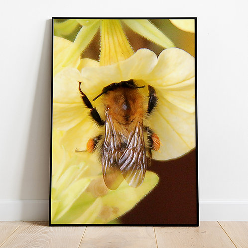 Better Bee-lieve it