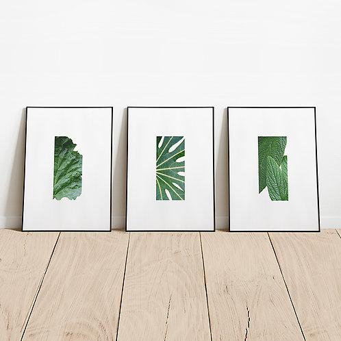 Rhubarb / Go for Green / Waxy Leaves // Triple Set