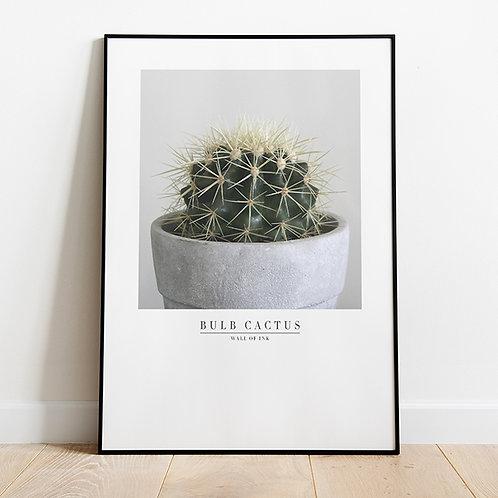 Hayley's Cactus