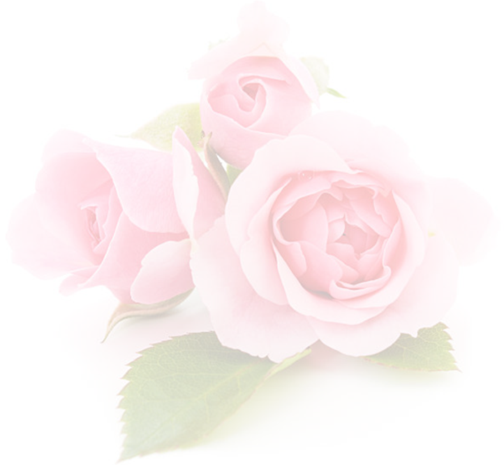 Pink Roses cropped.png