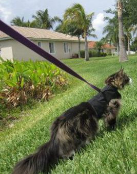 Leash walking your cat can be a lifesaver