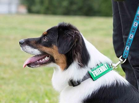 Collar coding your dog and other ways to prevent human-canine mishaps