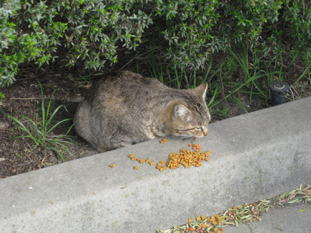 How to safely relocate a feral cat colony