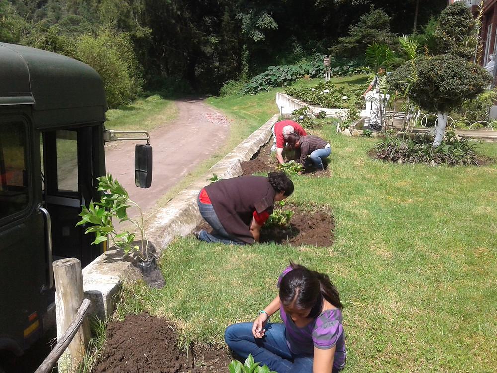 Plantación de hortensias por empleados de -IDESAC-