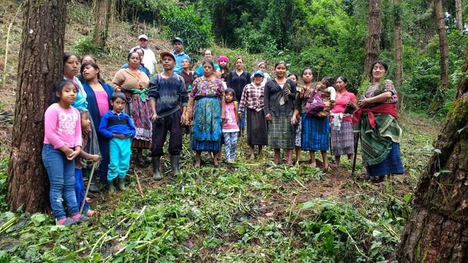 Reforestación de 125 árboles en San Rafael