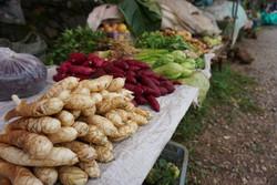doi mae salong market 2