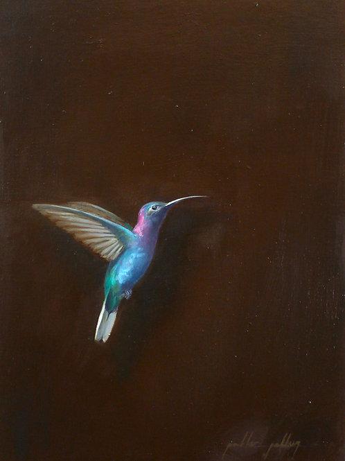 Serie de cuatro colibríes
