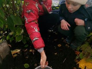 Собрали урожай картофеля и яблочек.