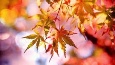 Autumn Equinox Online Mini Retreat