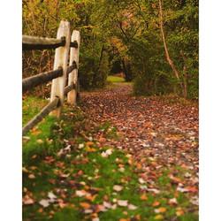 autumn calms me d