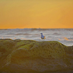 ⠀_Here's a little birdie enjoying this California sunset while I'm over here already planning for th