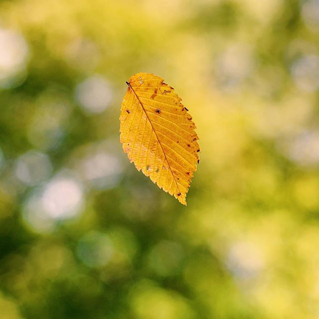 ⠀_This leaf fell from the tree and landed right on my shoulder as if to say _Hello Christine, fall i