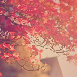 ⠀_⠀_I am going to try to pay attention to the spring.jpgng to look around at all the flowers and loo