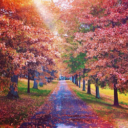 Autumn's still here, you just have to search a little deeper sometimes. Get outside, drive, walk, bi