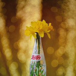 ⠀__Every consecutive year, I witness those daffodils pry themselves from the soil and explode into r