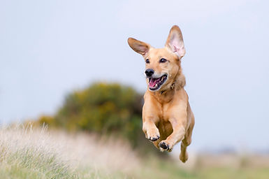 picture flying dog 2.jpg