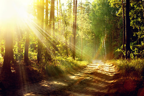 forest path with sunlbeams.jpg