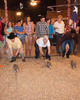 Wild Texas Experience Armadillor