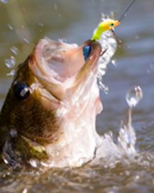 Catch a big bass on our Onion Creek Access! Hunting and fishing parties are welcome at Texas Trail Rides.