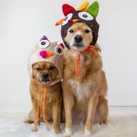 cute-dogs-in-turkey-thanksgiving-hats_t2