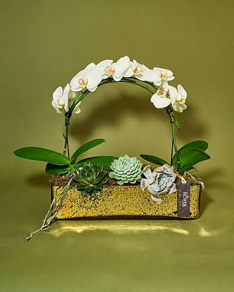 Orchid bow arrangement