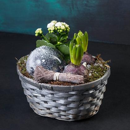 Mix Planted basket