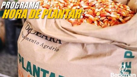 Sementes distribuídas através do programa Hora de Plantar abastecem o cariri cearense.