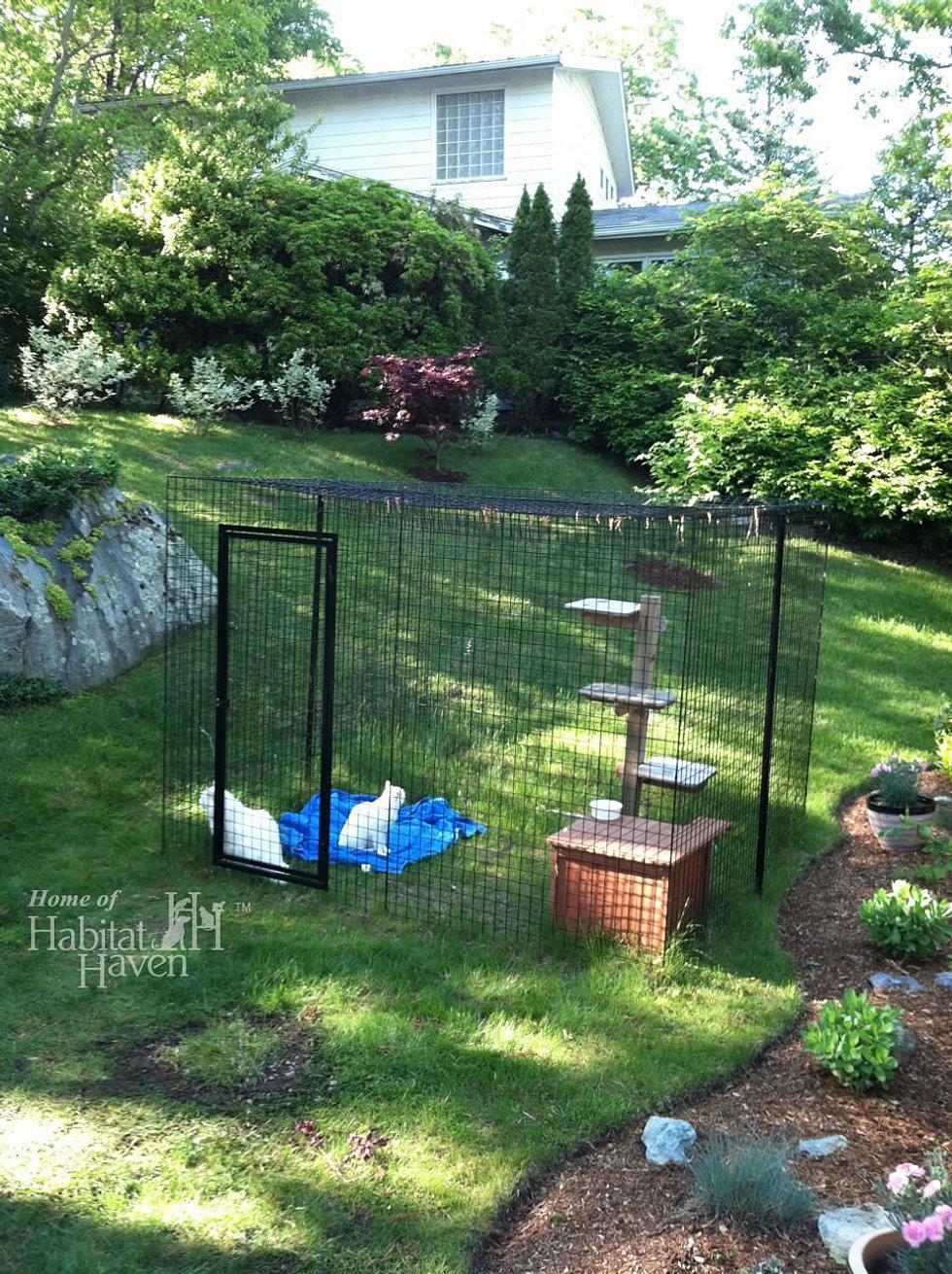 happy cat outdoor resorts catios cats feline enclosures habitat