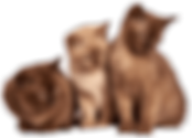3-cats-300x216.png
