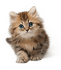 cute-cats-png-3.png