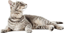 multiple-cats-png-17.png