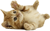 cat_PNG50488.png