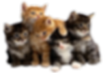 multiple-cats-png-10.png