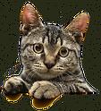 cat-png-transparent-3.png