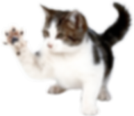 cat_PNG132.png