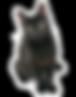 sidebar-black-cat.png