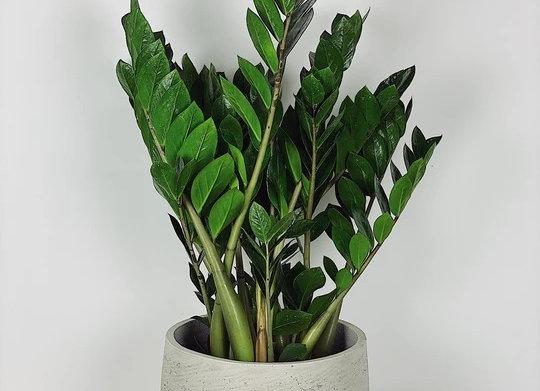 POINTLESS PLANTS