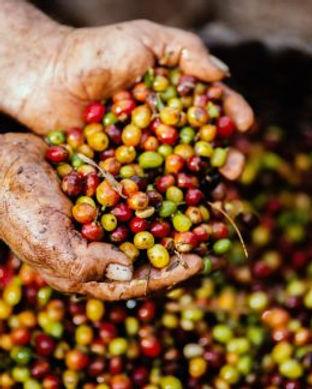 Coffee Story - Abundance Basket Close Up