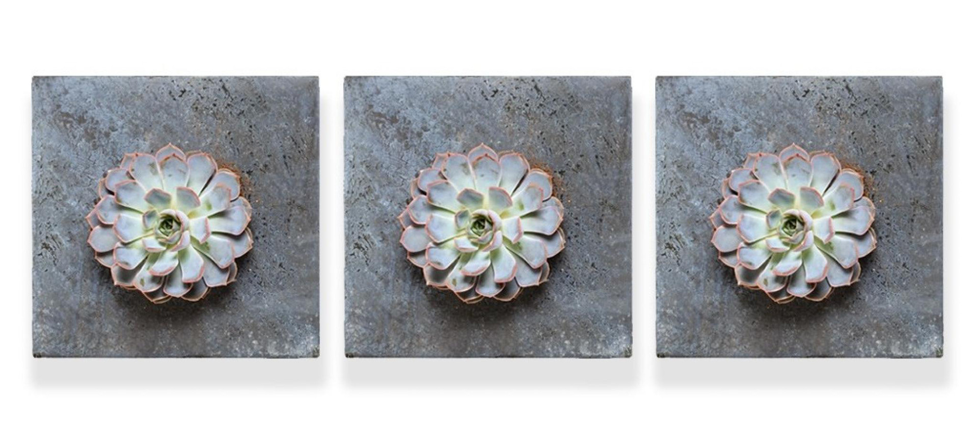 SOLO LIVING WALL SUCCULENT PLANTER SETS