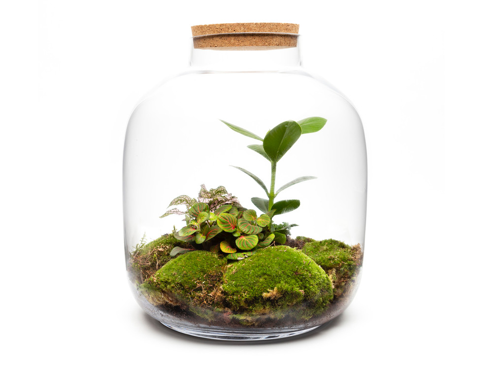 Ecospheres