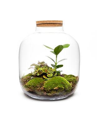 Ecospheres.jpg