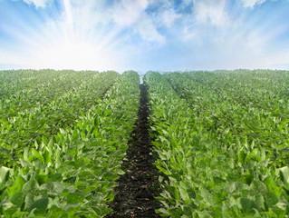 Plantio da soja chega a 35% no país. Confira a situação de cada estado!