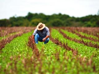 MP do emprego que inclui produtor rural é aprovada na Câmara