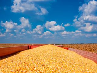 Aprosoja/MS consolida a área de milho 2ª Safra 2020 e atualiza dados da produção